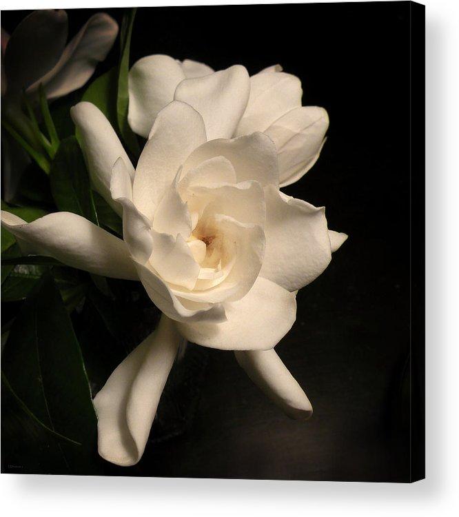 Flower Acrylic Print featuring the photograph Gardenia Blossom by Deborah Smith