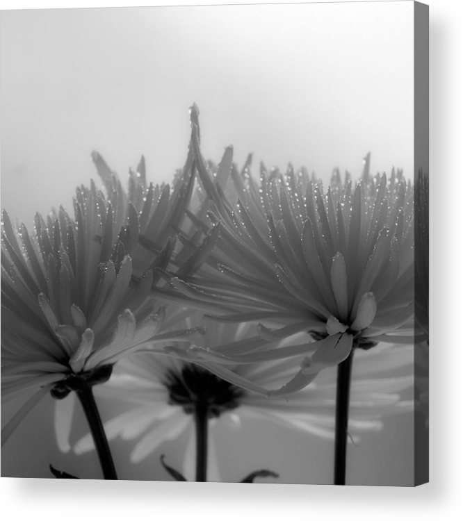 Flowers Acrylic Print featuring the photograph Intimacy by Tom Druin