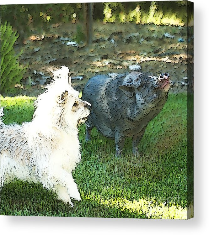 Pig Acrylic Print featuring the photograph Treats For Woody And Schnitzel by Artist and Photographer Laura Wrede