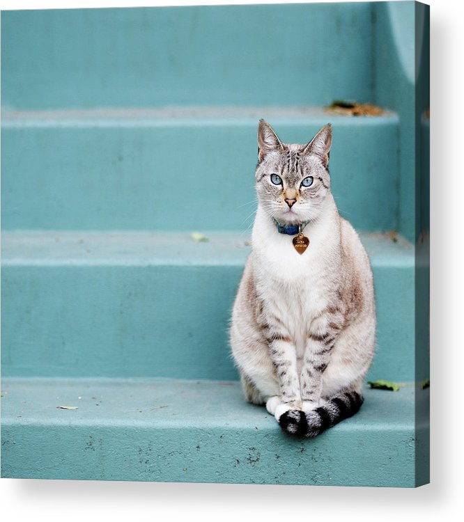 Square Acrylic Print featuring the photograph Kitty On Blue Steps by Lauren Rosenbaum