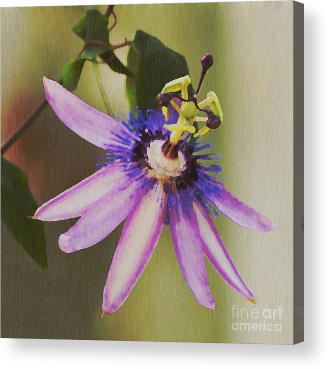 Passion Flower Acrylic Print featuring the painting Passion Flower by Artist and Photographer Laura Wrede