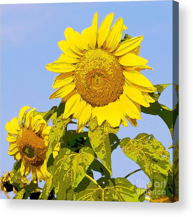 Sunflowers Acrylic Print featuring the digital art Sunflowers In Morning by Artist and Photographer Laura Wrede