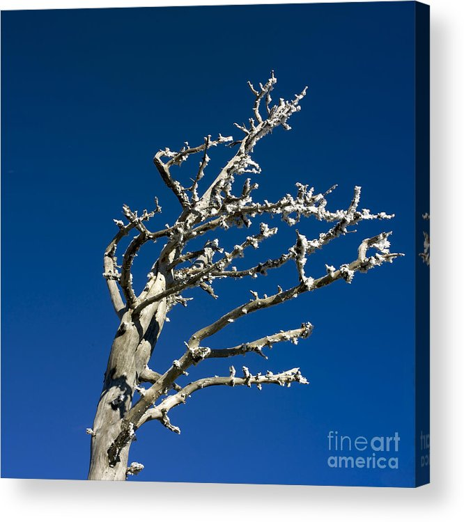 Wintry Acrylic Print featuring the photograph Tree In Winter Against A Blue Sky by Bernard Jaubert
