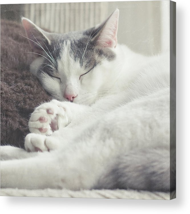Square Acrylic Print featuring the photograph White And Grey Cat Taking Nap On Couch by Cindy Prins