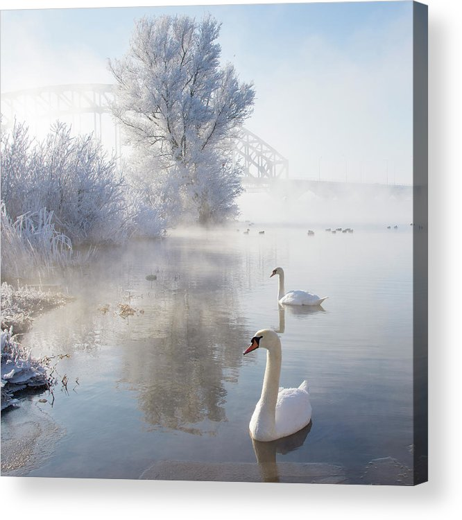 Square Acrylic Print featuring the photograph Icy Swan Lake by E.M. van Nuil