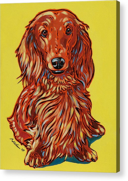 Dachshund Acrylic Print featuring the painting Long Haired Dachshund by Nadi Spencer