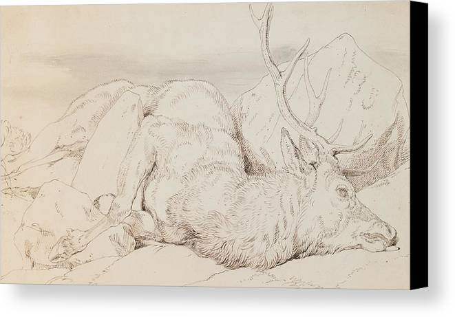 C19th Canvas Print featuring the drawing A Dead Stag by Sir Edwin Landseer