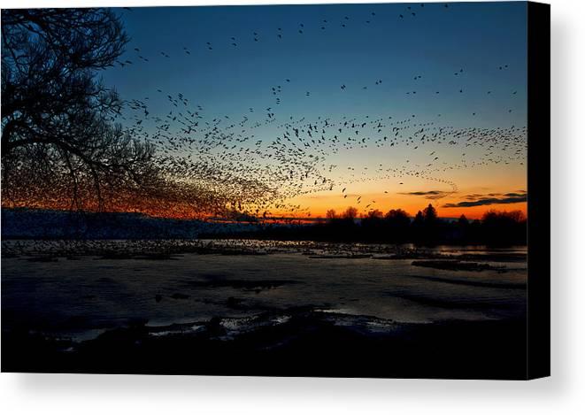 Matt Molloy Canvas Print featuring the photograph The Swarm by Matt Molloy
