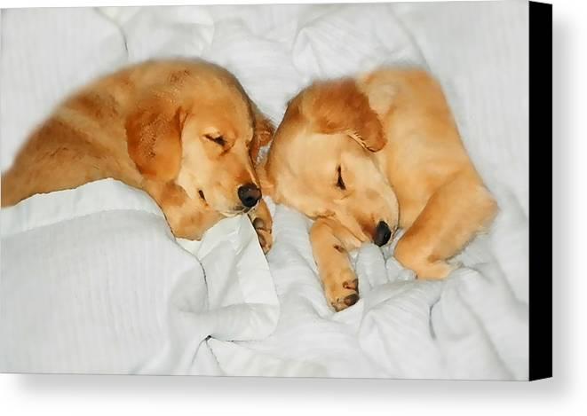 Golden Retriever Canvas Print featuring the photograph Golden Retriever Dog Puppies Sleeping by Jennie Marie Schell