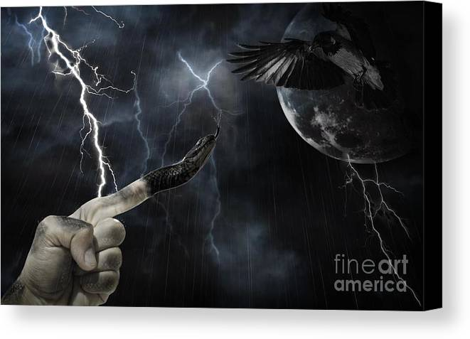Snake Canvas Print featuring the photograph Winner Takes All by Joanne Kocwin