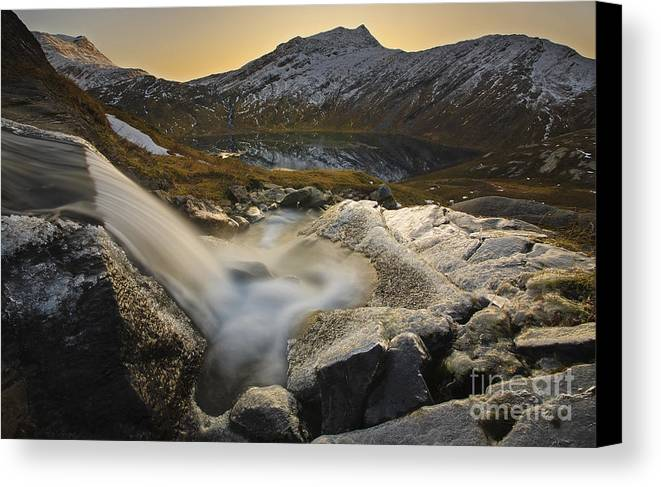 Golden Canvas Print featuring the photograph A Small Creek Running by Arild Heitmann
