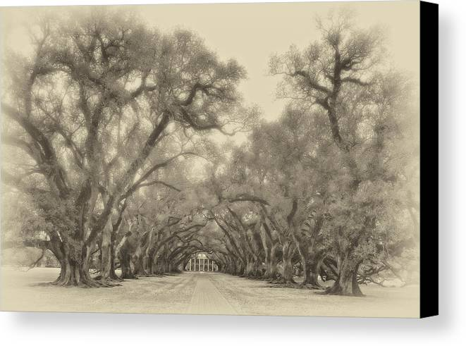 Oak Alley Plantation Canvas Print featuring the photograph And Time Stood Still Sepia by Steve Harrington