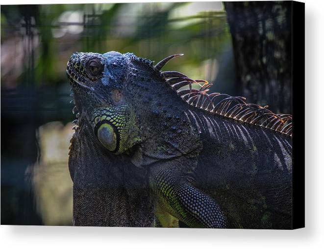 Nature Canvas Print featuring the photograph Just Chillin by Lesley Brindley
