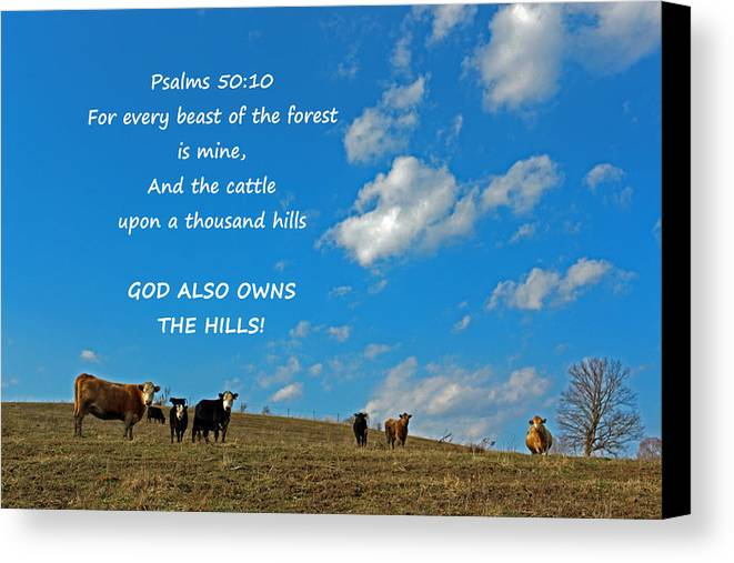 Cattle Canvas Print featuring the digital art A Thousand Hills by Lorna Rogers Photography