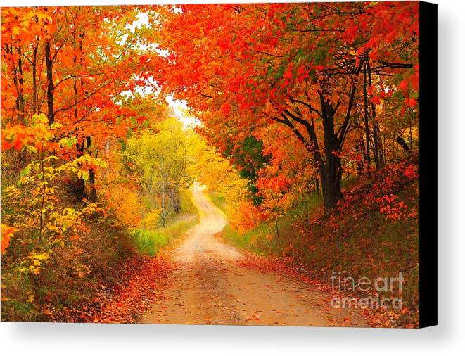 Autumn Canvas Print featuring the photograph Autumn Cameo 2 by Terri Gostola