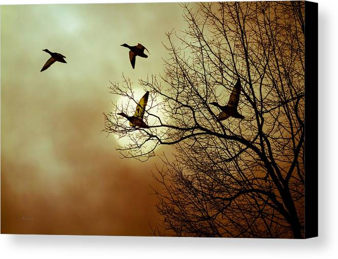 Duck Canvas Print featuring the photograph Before A Winter Sky by Bob Orsillo