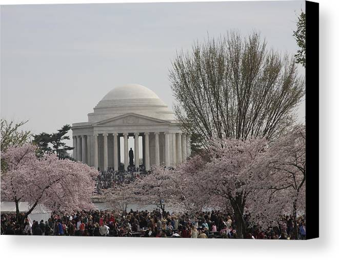 Cherry Canvas Print featuring the photograph Cherry Blossoms With Jefferson Memorial - Washington Dc - 01132 by DC Photographer