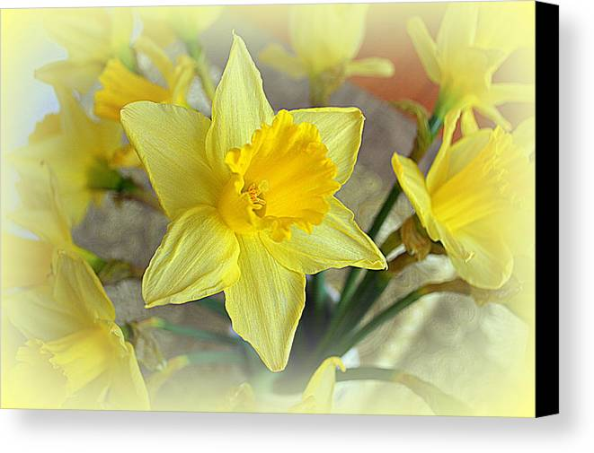 Daffodil Canvas Print featuring the photograph Daffodil by Bishopston Fine Art