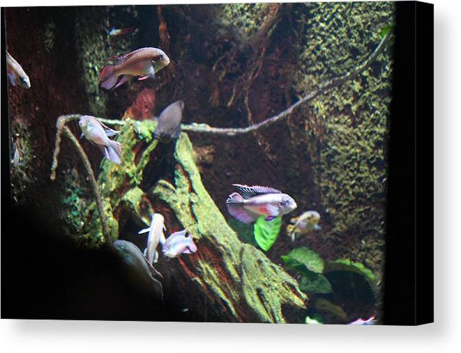 Fish National Aquarium In Baltimore Md 121296 Canvas Print Canvas Art By Dc Photographer
