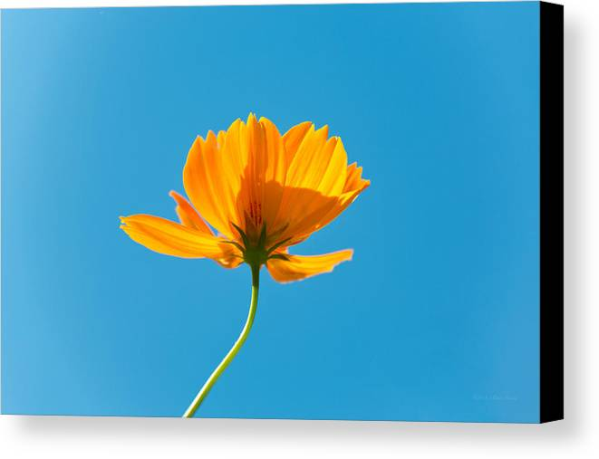 Orange Canvas Print featuring the photograph Flower - Growing Up In Brooklyn by Mike Savad