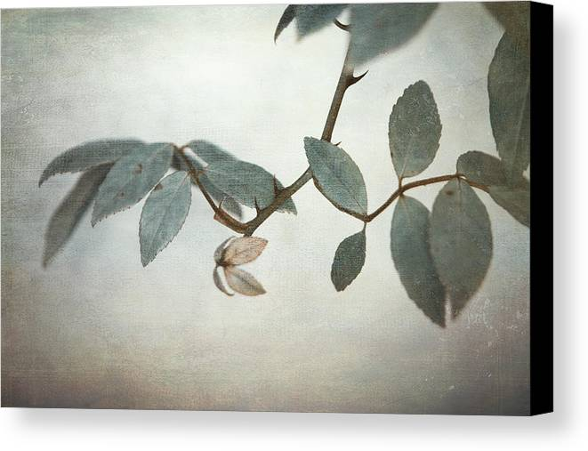 Leaves Canvas Print featuring the photograph How Delicate This Balance by Laurie Search