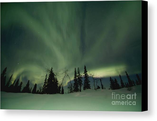 Dawson City Canvas Print featuring the photograph Light Dancers by Priska Wettstein