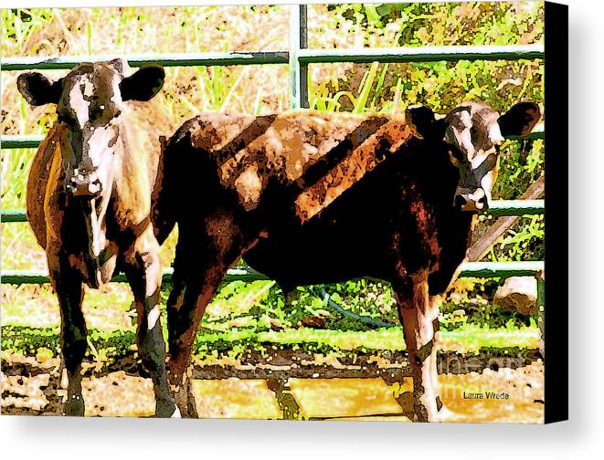 Cow Art Photographs Canvas Print featuring the photograph Looking At You by Artist and Photographer Laura Wrede