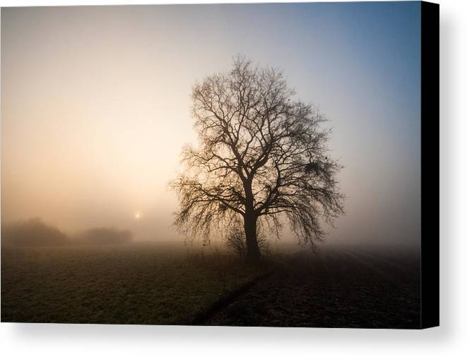 Landscape Canvas Print featuring the photograph Mystic Morning by Davorin Mance