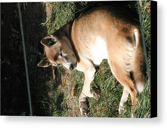 National Canvas Print featuring the photograph National Zoo - Mammal - 12124 by DC Photographer