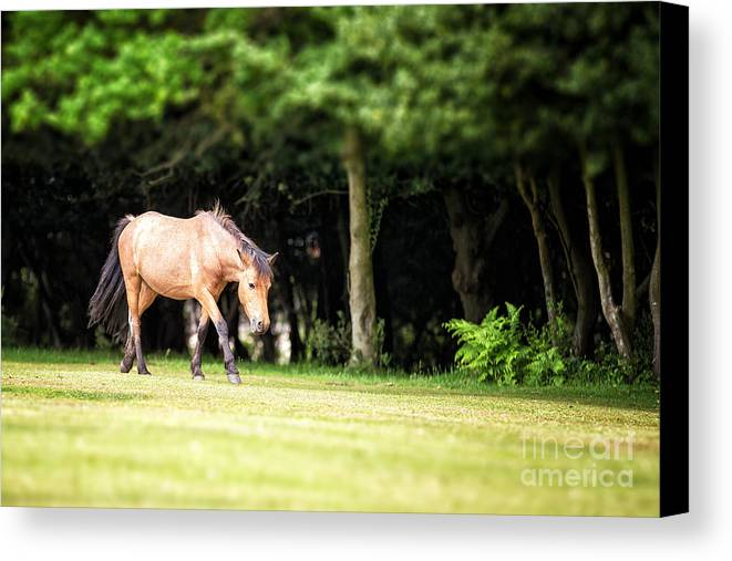 Forest Canvas Print featuring the photograph New Forest Pony by Jane Rix