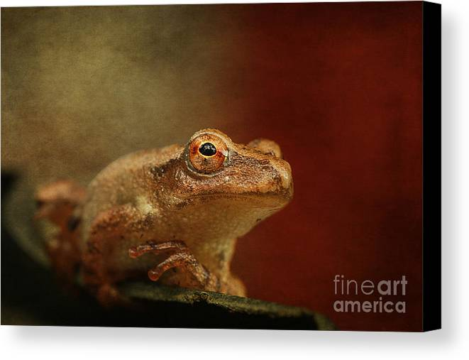 Cindi Ressler Canvas Print featuring the photograph Northern Spring Peeper by Cindi Ressler