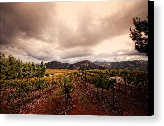 Winery Canvas Print featuring the photograph Orfila by Ryan Weddle
