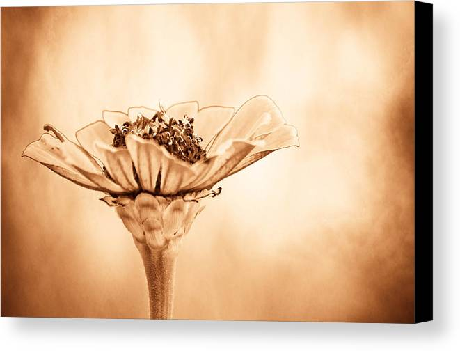 Flower Canvas Print featuring the photograph Phillies Need A Win by Trish Tritz