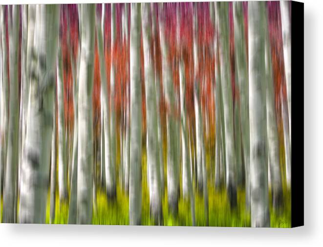 3scape Photos Canvas Print featuring the photograph Progression Of Autumn by Adam Romanowicz