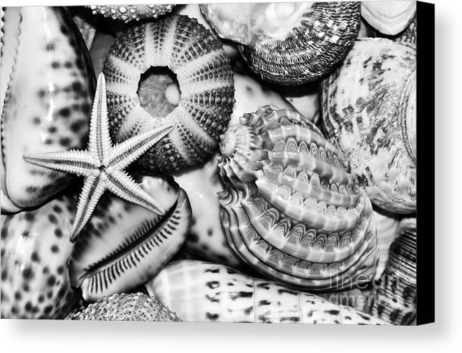 Photography Canvas Print featuring the photograph Shellscape In Monochrome by Kaye Menner