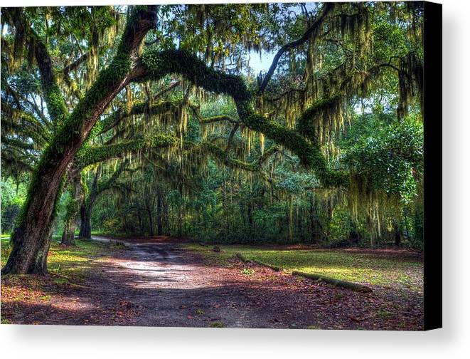 Spanish Moss Canvas Print featuring the photograph Spanish Moss by Mel Steinhauer