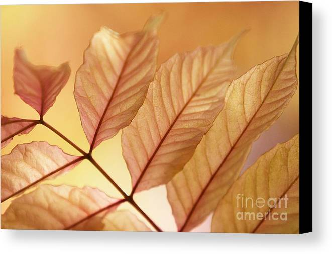 Leaves Canvas Print featuring the photograph Stems by Andrew Brooks