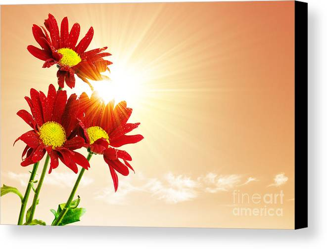 Background Canvas Print featuring the photograph Sunrays Flowers by Carlos Caetano