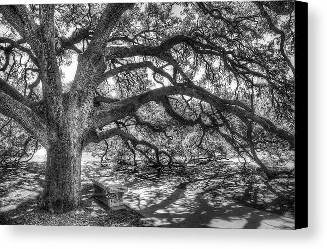 Tree Canvas Print featuring the photograph The Century Oak by Scott Norris