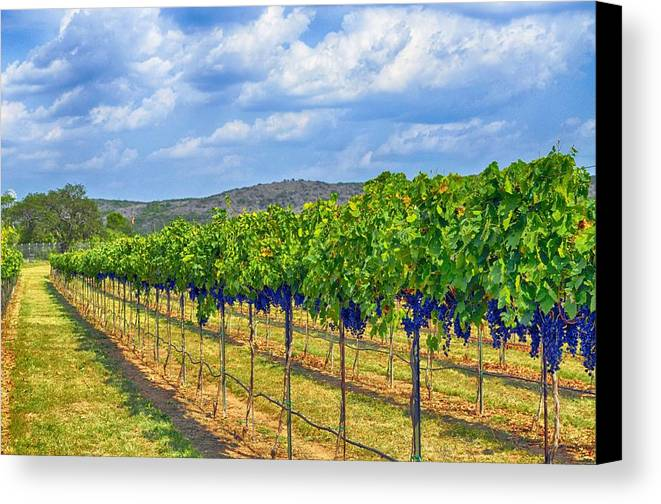 Wine Country Canvas Print featuring the photograph The Vineyard In Color by Kristina Deane
