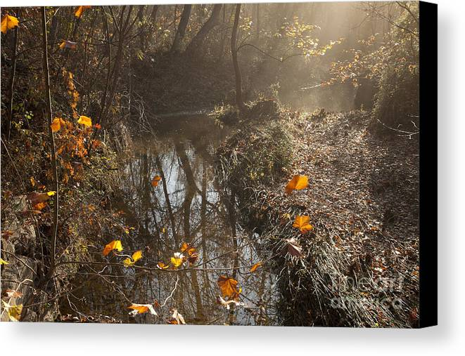 Mystical Canvas Print featuring the photograph Travertine Creek In The Woods by Iris Greenwell