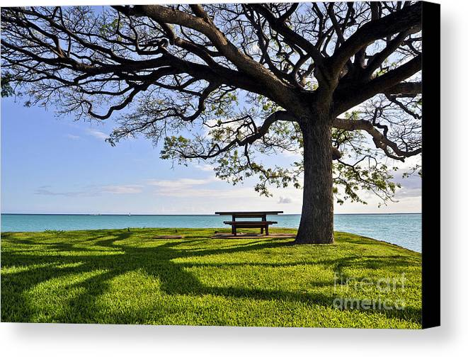 Ocean Canvas Print featuring the photograph Tree Canopy by Gina Savage
