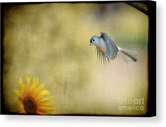 Tufted Titmouse Canvas Print featuring the photograph Tufted Titmouse Flying Over Flower by Dan Friend