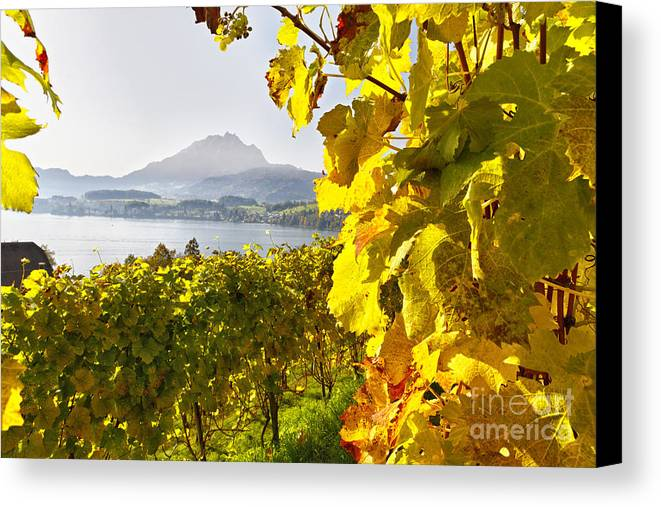 Lucerne Canvas Print featuring the photograph Vineyard At Lake Lucerne by George Oze