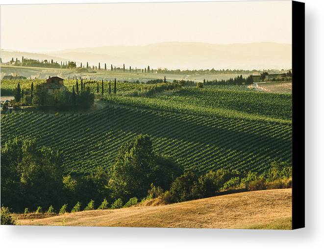Fine Art Canvas Print featuring the photograph Vineyard From Above by Clint Brewer