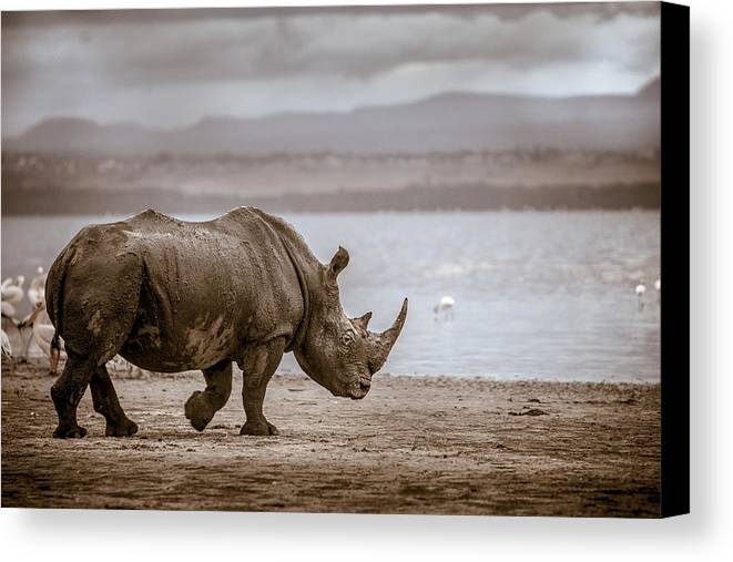 Africa Canvas Print featuring the photograph Vintage Rhino On The Shore by Mike Gaudaur