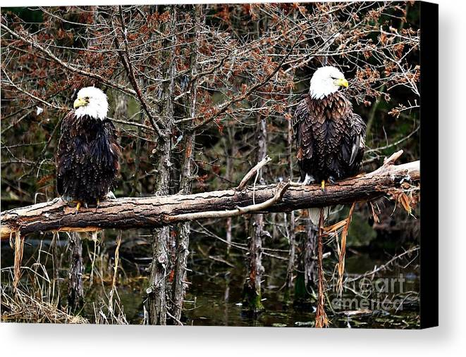 Bald Eagles Canvas Print featuring the photograph Watchful Eyes by Elizabeth Winter