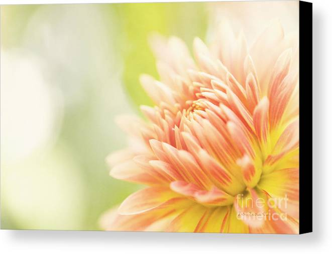 Dahlia Canvas Print featuring the photograph When Summer Dreams by Beve Brown-Clark Photography