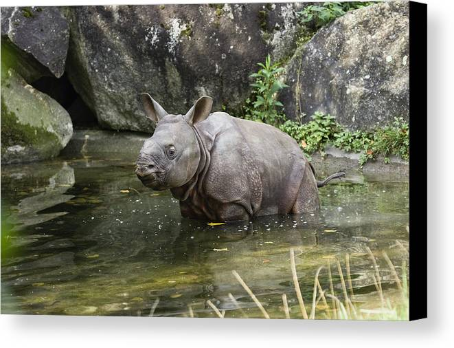 Mp Canvas Print featuring the photograph Indian Rhinoceros Rhinoceros Unicornis by Konrad Wothe