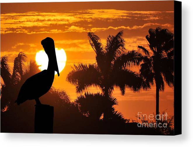 Pelican Canvas Print featuring the photograph Pelican At Sunset by Dan Friend